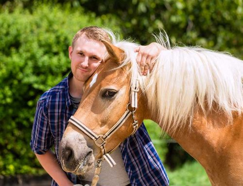 5 things we learn from horses in Equine Therapy