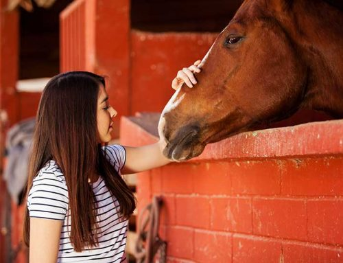 Super sensitive horses pick up on our hidden emotions