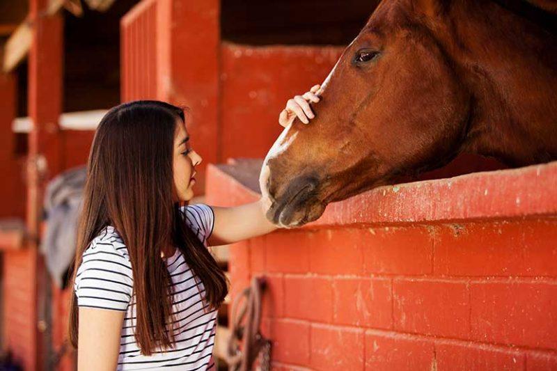 Super Sensitive Horses