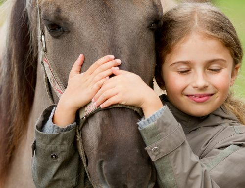 Why horses for therapy?